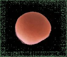 Mini brioche rood 35g